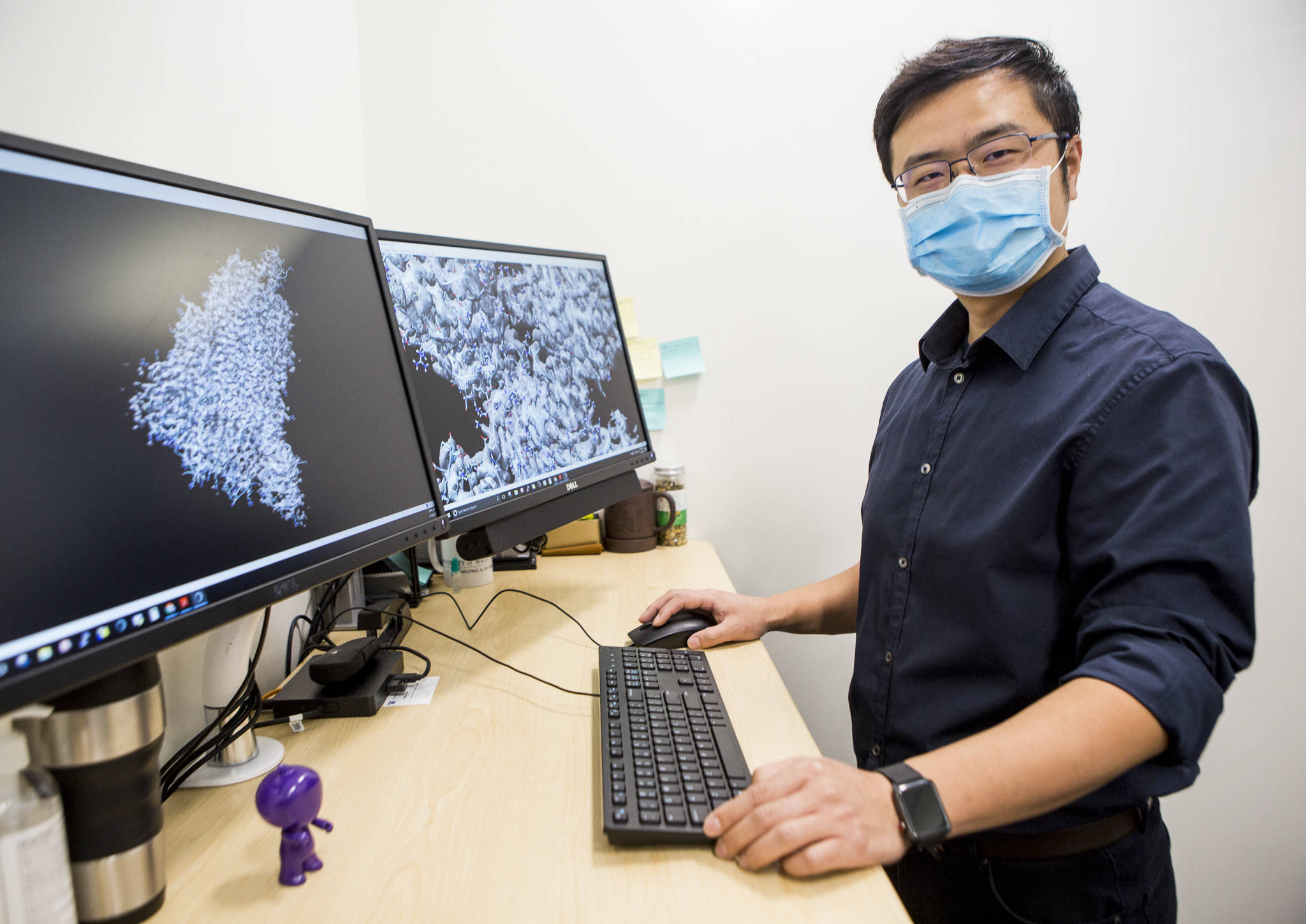 Dong Si, a University of Washington Bothell computational science professor, with two images of COVID-19 and a human cell created in tandem with his students. (Olivia Vanni / The Herald)